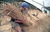 Thatching. Laying bundles on a roof using legget.