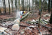 Man cutting trunk with chainsaw in a forest