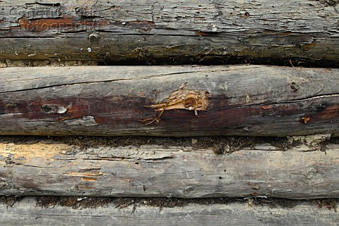 Timber on a wall of a house