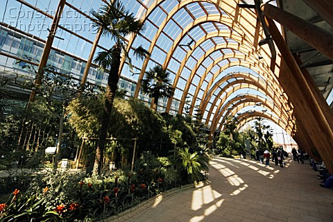 A066 00023 Winter Garden Sheffield Yorkshire And Humb